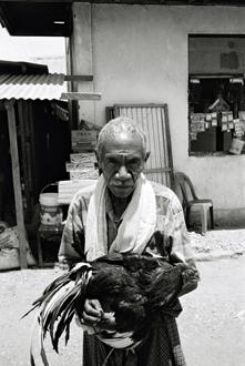 Vieil Homme et son coq de combat, Baucau.