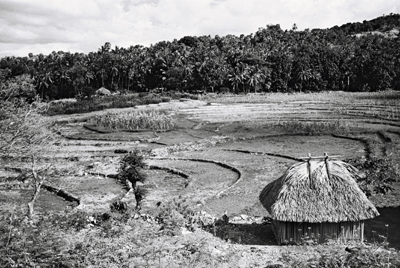 Rizière Timoraise