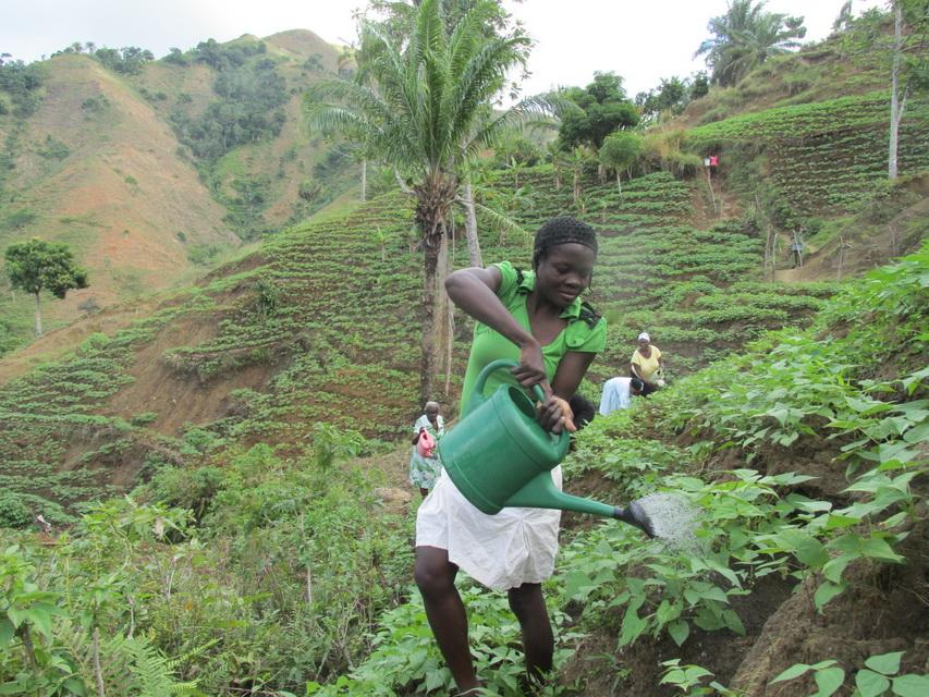 Sécuruté alimentaire PAIS Haïti